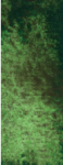3-197 Green apatite genuine